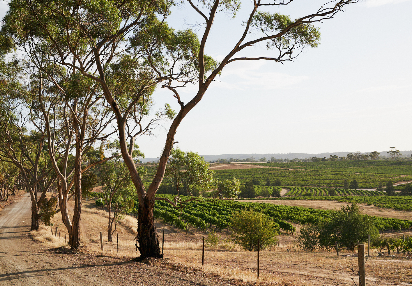 Vineyards in the Barossa