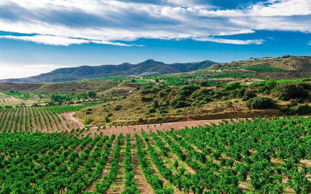 Vineyard in Jumilla